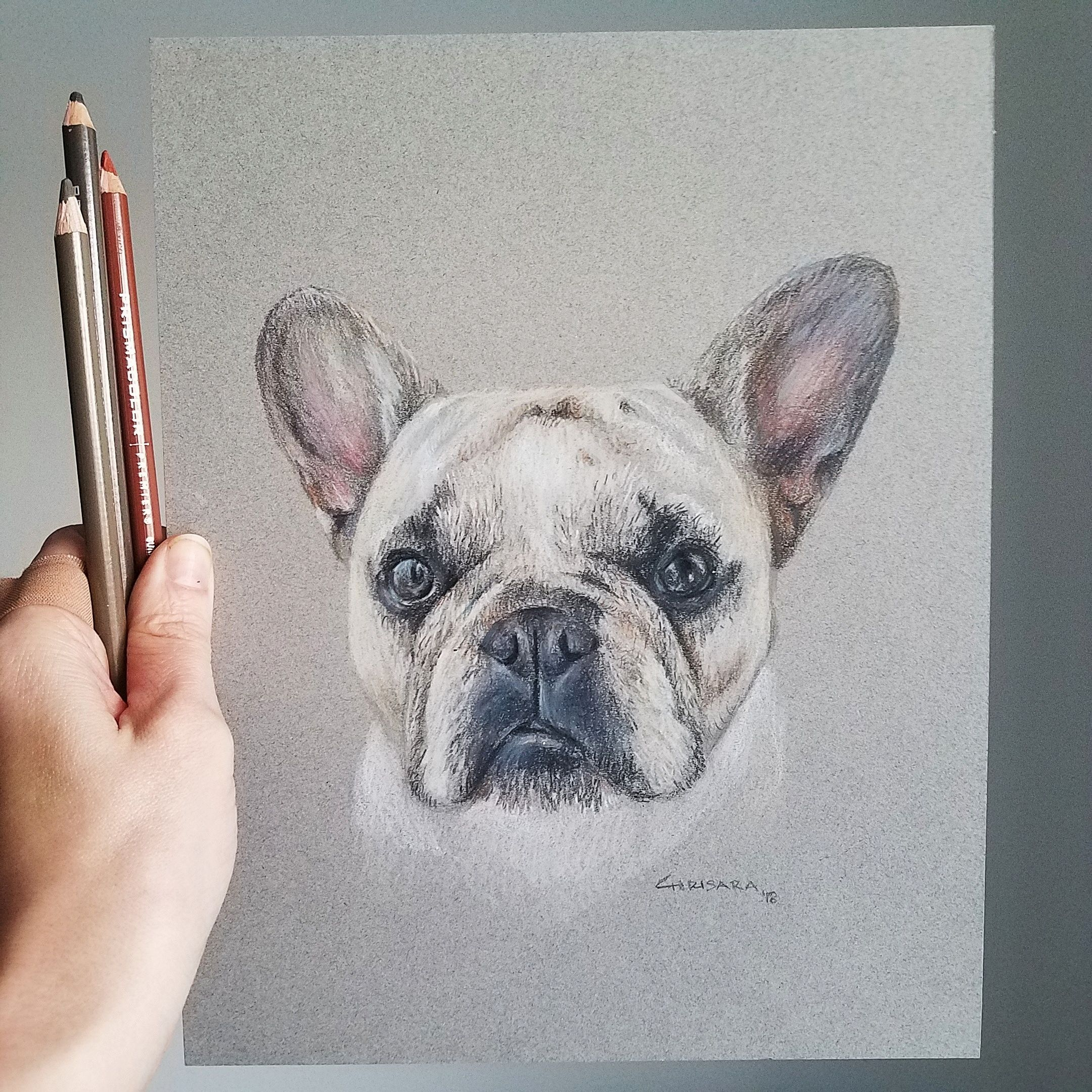 French Bulldog Portrait Drawing by Chrisara Designs