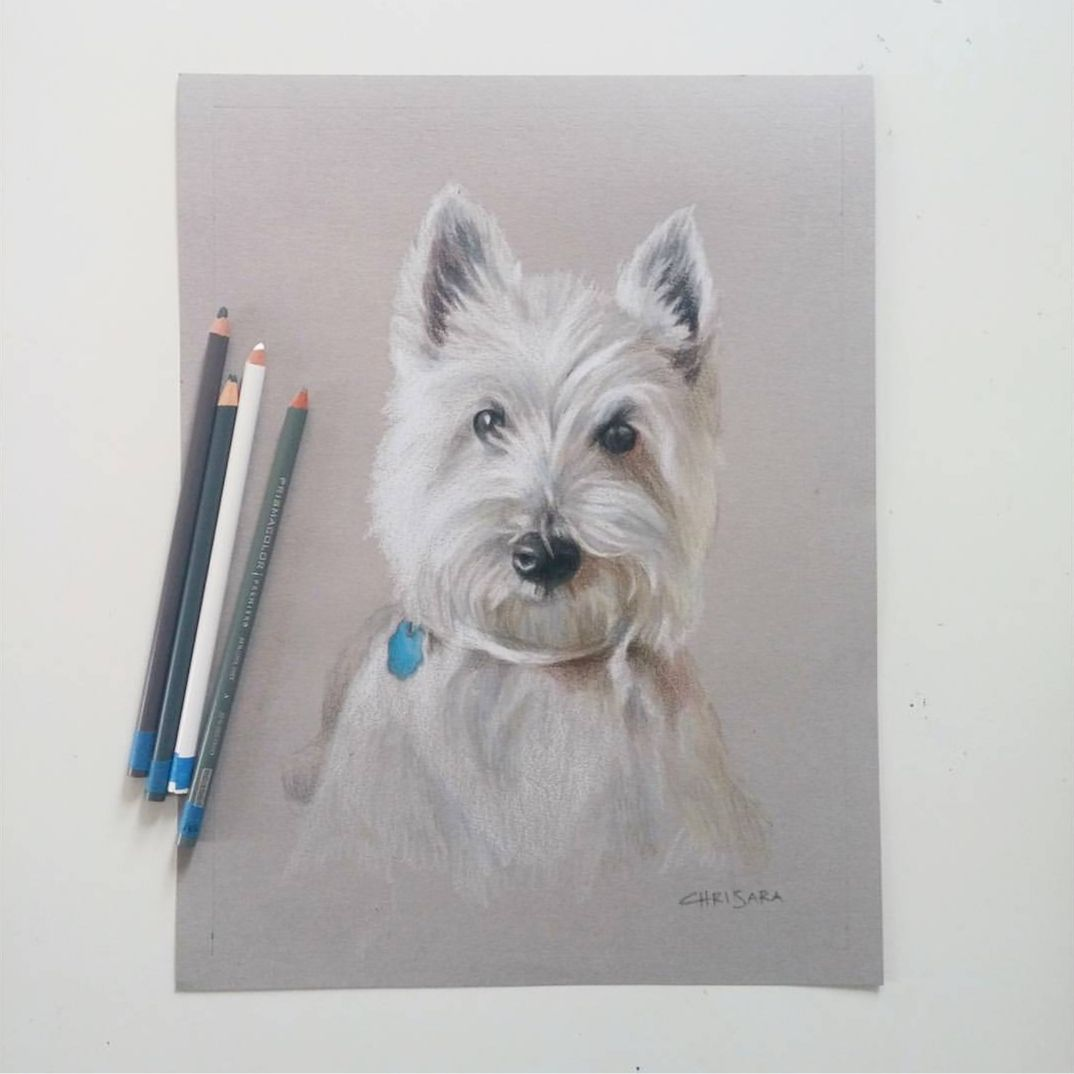 Westminster Terrier Dog Portrait Drawing by Chrisara Designs