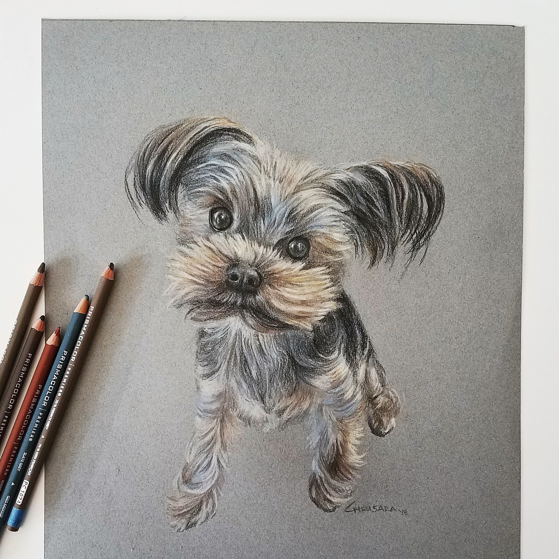 Yorkshire Terrier Dog Portrait Drawing by Chrisara Designs