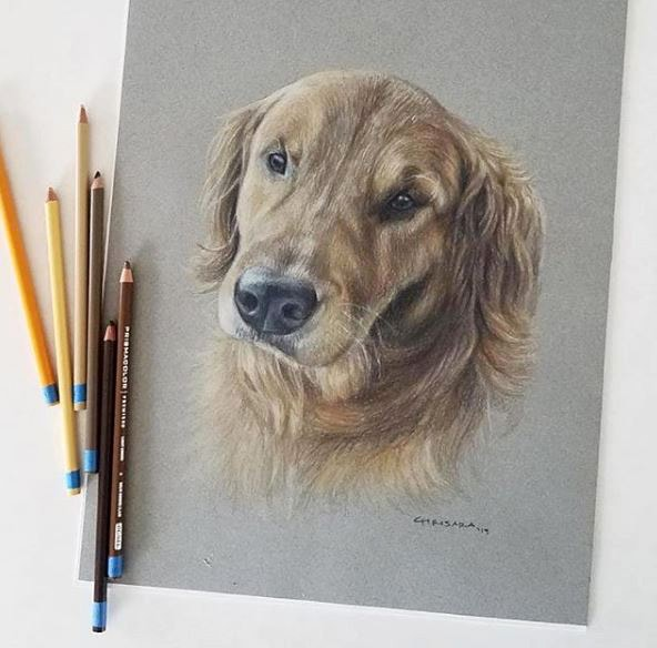 Pet Portrait Drawing by Chrisara Designs